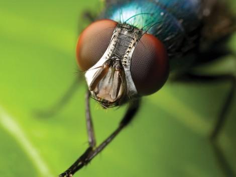 +sinek-böcek